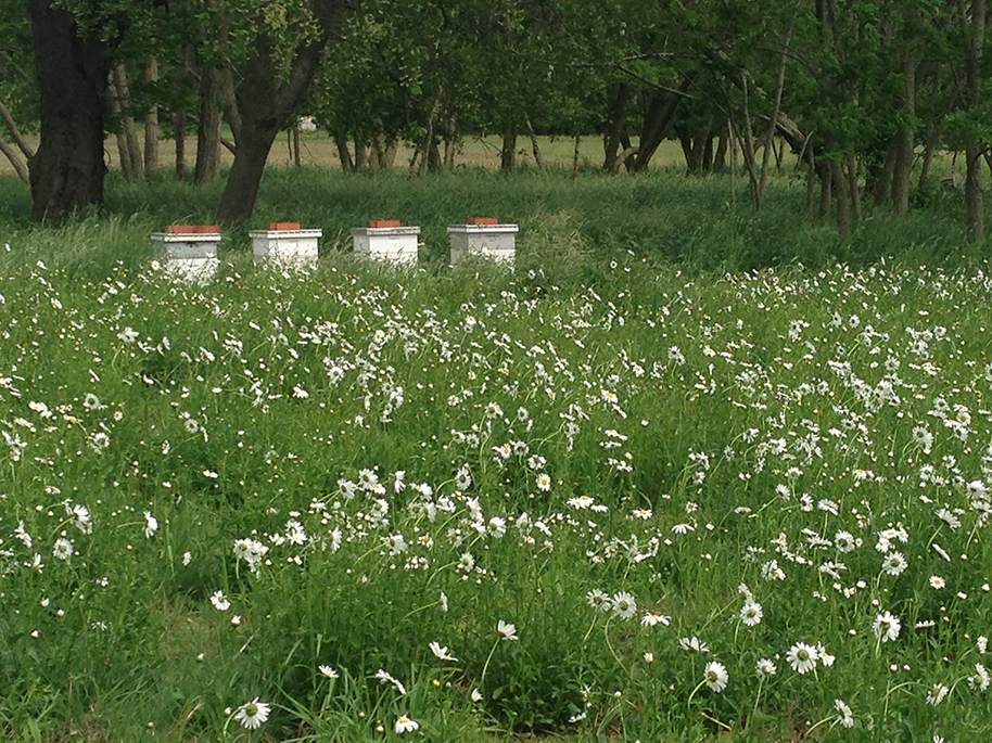 Honey Bee Hives and Field