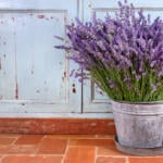 DIY Lavender oil recipe that's easy to make and supports relaxation.