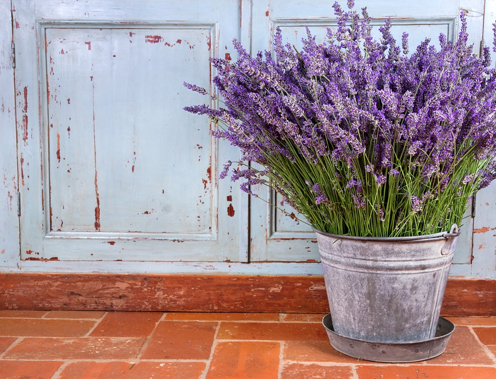 how to make lavender body oil in 9 steps in an affordable way. Black Bedroom Furniture Sets. Home Design Ideas