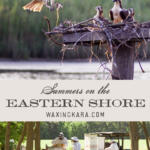 Summers on the Eastern Shore pinterest image