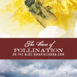 pollination tall pin