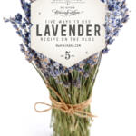 Unique uses for the purple plant. Discover five ways to use lavender as a bug and moth repellent, to soothe aches and pains, for burn relief and in food. Calm your stomach, mind, and skin.