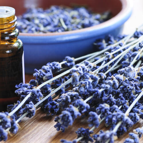 Lavender oil on table with fresh picked lavender and purple bowl with lavender flowers