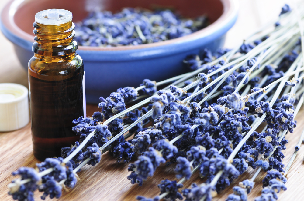 Lavender oil is a relaxing elixir. Dried lavender flowers can be used in a variety of ways. One of my favorites to-dos is a lavender body oil perfect for soothing sore muscles and irritated skin and provides a scent that will relax both mind and body.