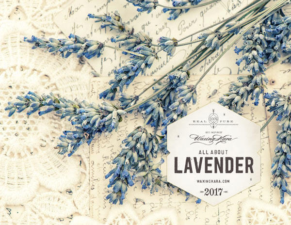 All About Lavender eBook