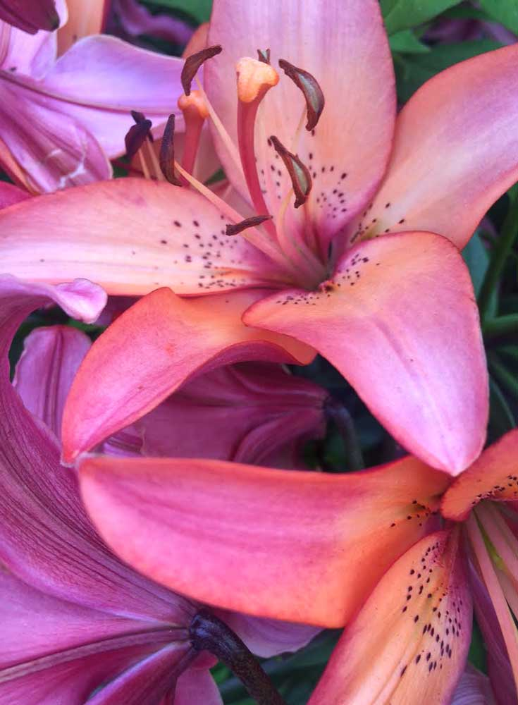 Lilies for a midsummer's eve party centerpiece
