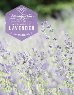 All About Lavender eBook thumbnail
