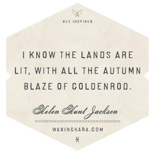 I know the lands are lit, with all the autumn blaze of goldenrod.--Helen Hunt Jackson