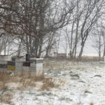 bees prepare for winter Hives on the farm at Chesterhaven Beach Farm during a small snow storm