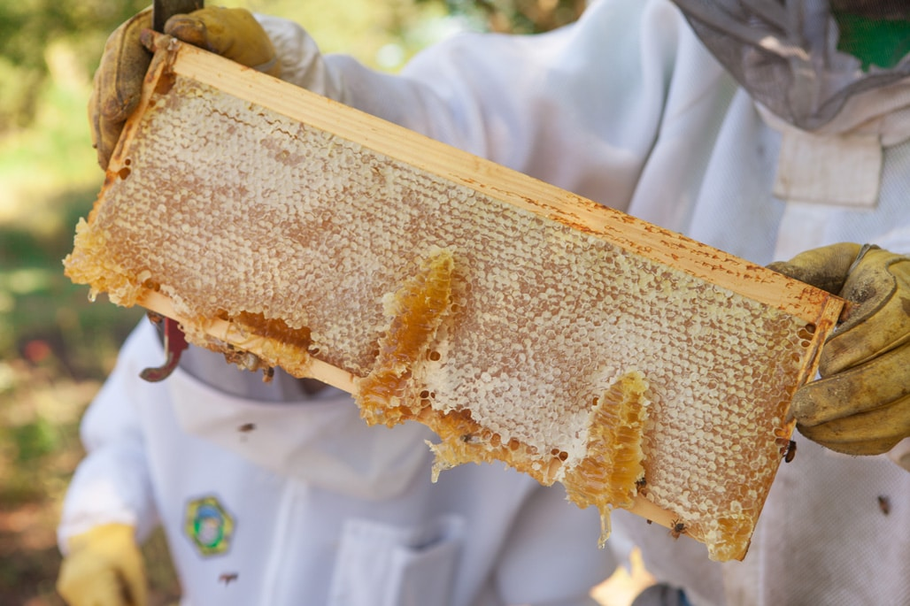A section of comb from the hives