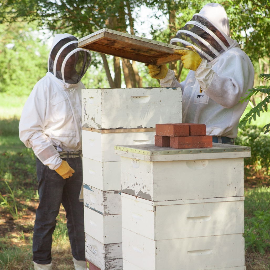 Ben and Eric opening the hives during honey harcvest