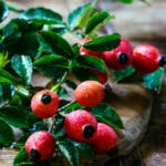 Rosehips provide a rich source of vitamins and antioxidants for our body products