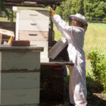 A stack of hives in the back of a truck on the farm