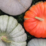 Mixed heirloom pumpkins in the grass