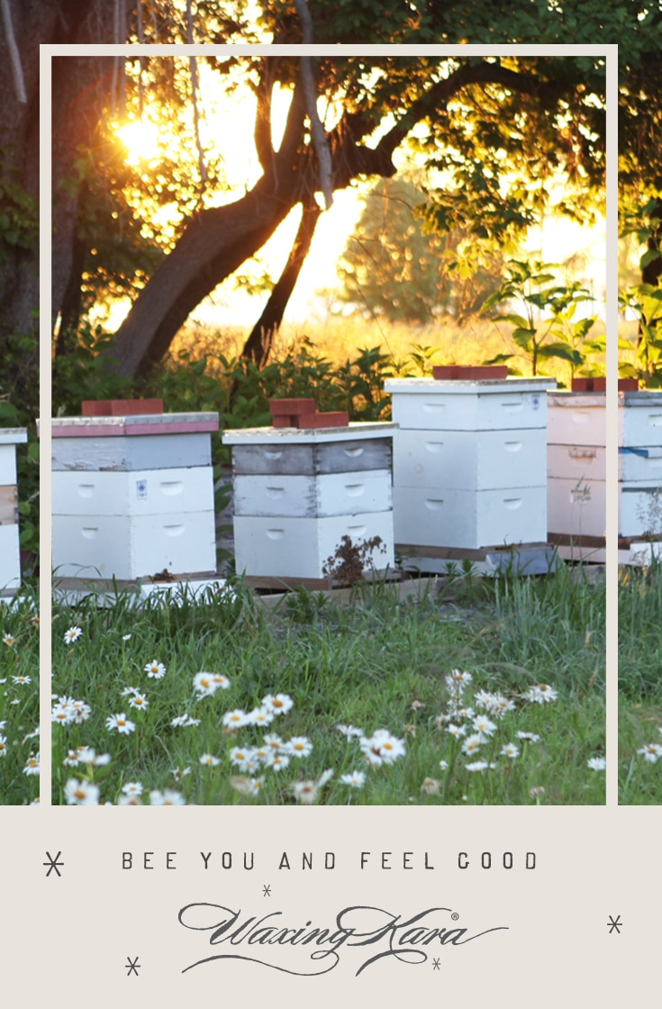 Pinterest image of the beehives in a field at sunset