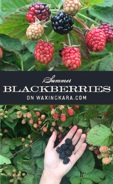 Summer Blackberries Tall Pin