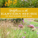 Eastern Shore Wildflowers Tall Pin
